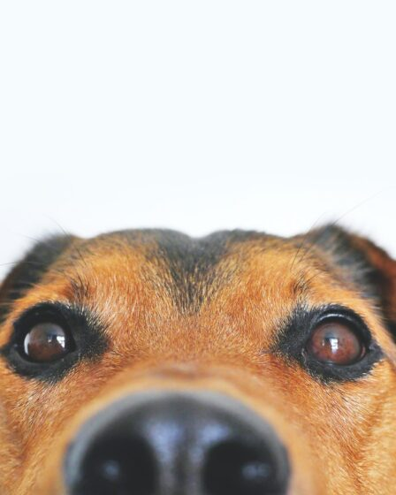 Bürohund