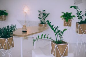Dekorative Pflanzen
