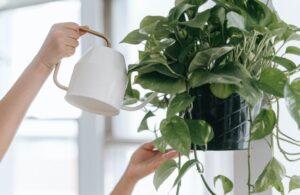 Pflanzen brauchen Wasser